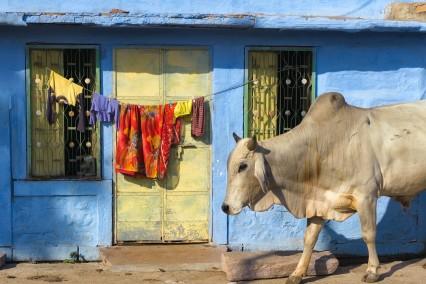 india-koe