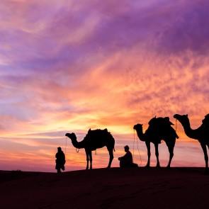 iran-kamelen