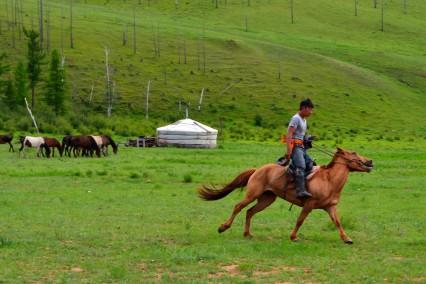 mongolie-terelj-paarden