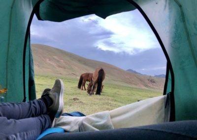 paardrijden terelj tent