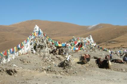 tibet-yaks-gebedsvlaggen